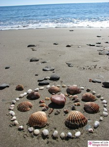 nature, mandala, ocean, circles, sacred, shells, stones,