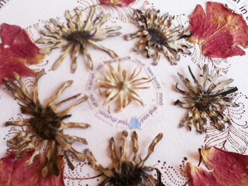 nature mandala, pressed flowers, natural, sacred circle