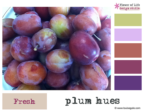plums colour story ©Louise Gale