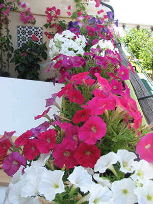flowersAug_300pxls