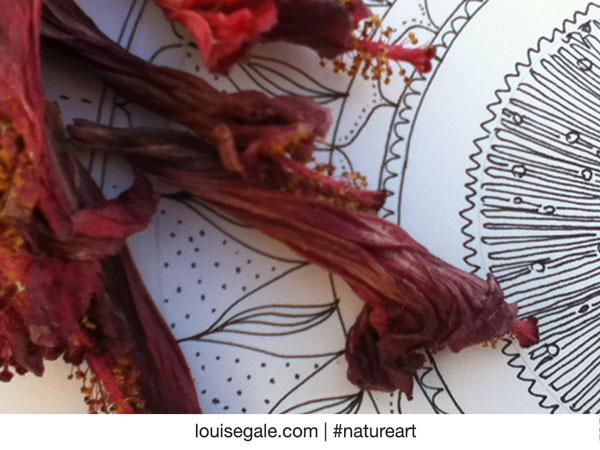 S_peek_mandala&hibiscus_600pxls