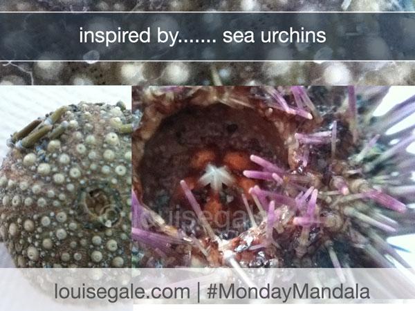 monday mandala Sea urchin