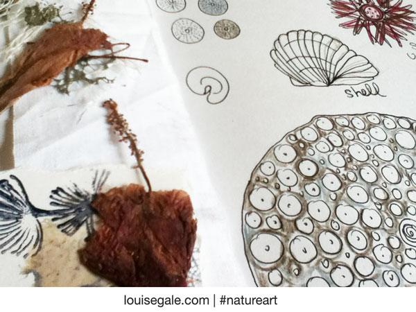 sea urchin journal page