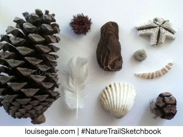 Nature Trail Sketchbook Collections ©Louisegale.com