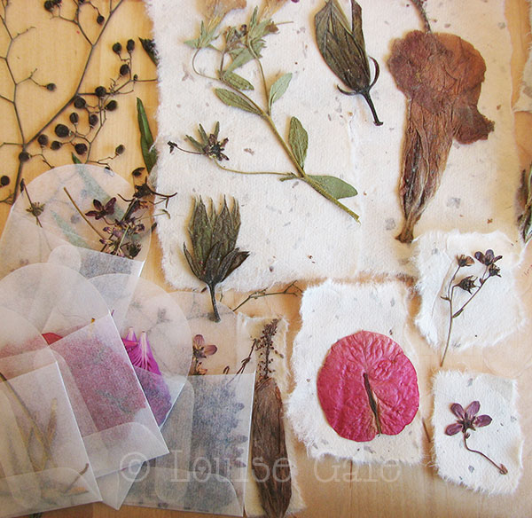 Pressed flowers ©Louisegale.com #NatureTrailSketchbook