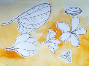 Nature Sketches from Bali