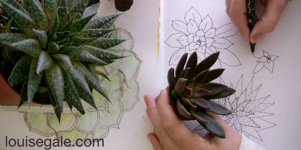 drawing succulents mandala ©Louise Gale