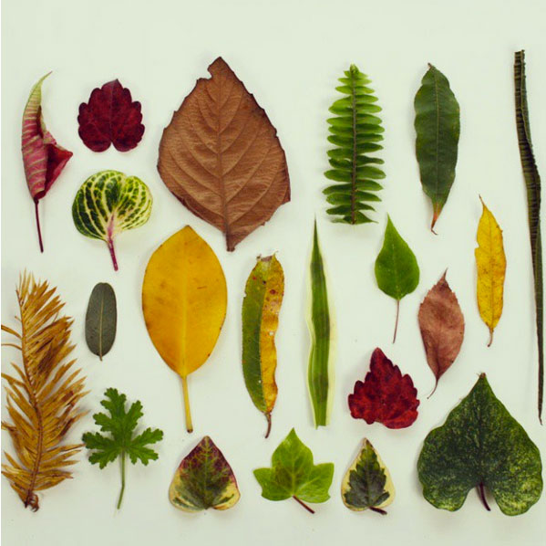 leaf collection for 52 weeks of nature inspired art