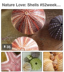 pinterest shells 52 weeks of nature art