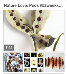 pods pinterest 52 weeks of nature art