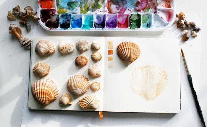 shell sketchbook scene 52 weeks of nature art