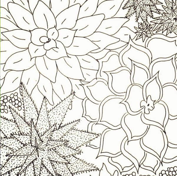 succulent drawing black and white 52 weeks of nature art