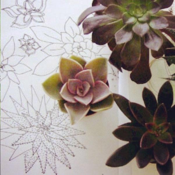 succulent drawings 52 weeks of nature art
