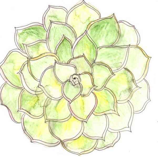 succulent mandal painting 52 weeks of nature art