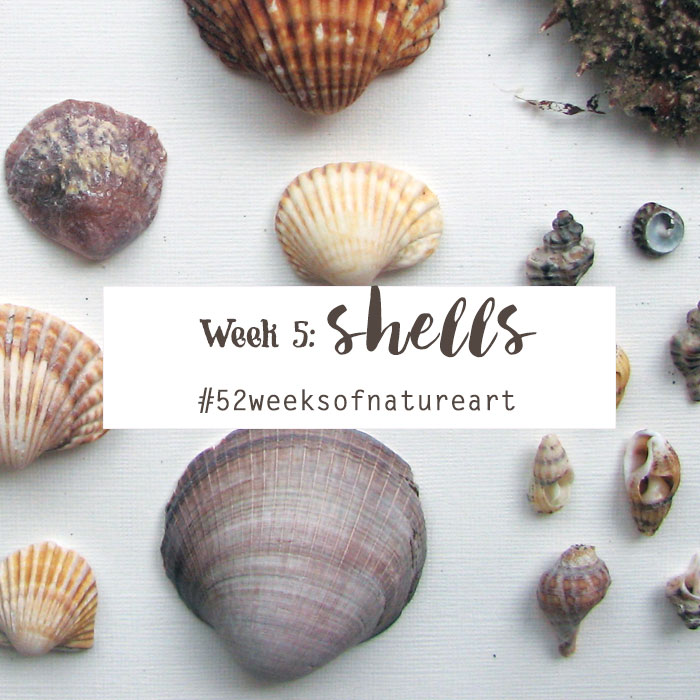 shells 52 weeks of nature art