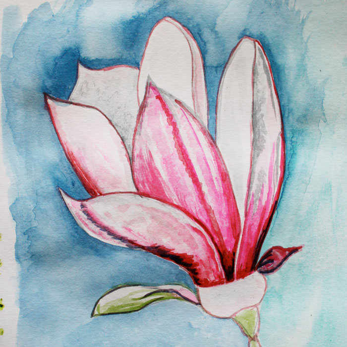 magnolia sketchbook page Louise Gale