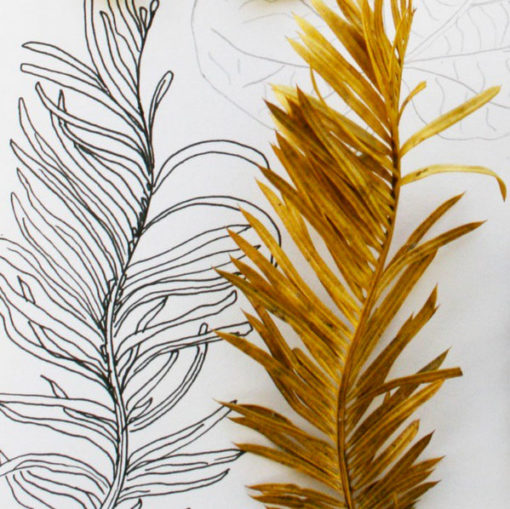 Sketching autumn leaves and colors Louise Gale