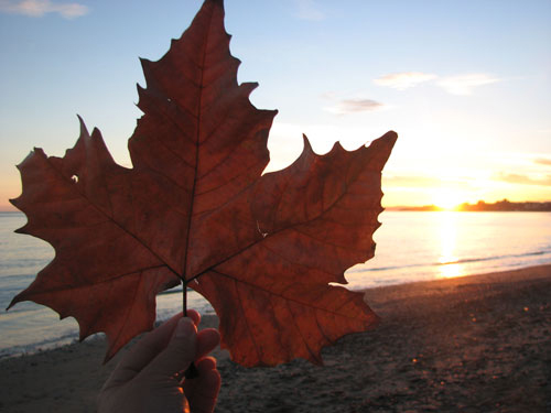 Leaf at sunset in spain Louise Gale