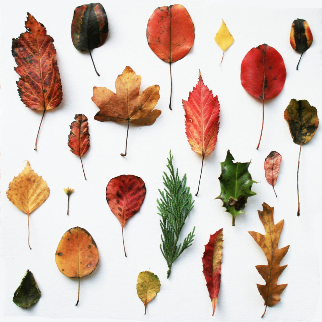 Autumn Leaf collection Louise Gale